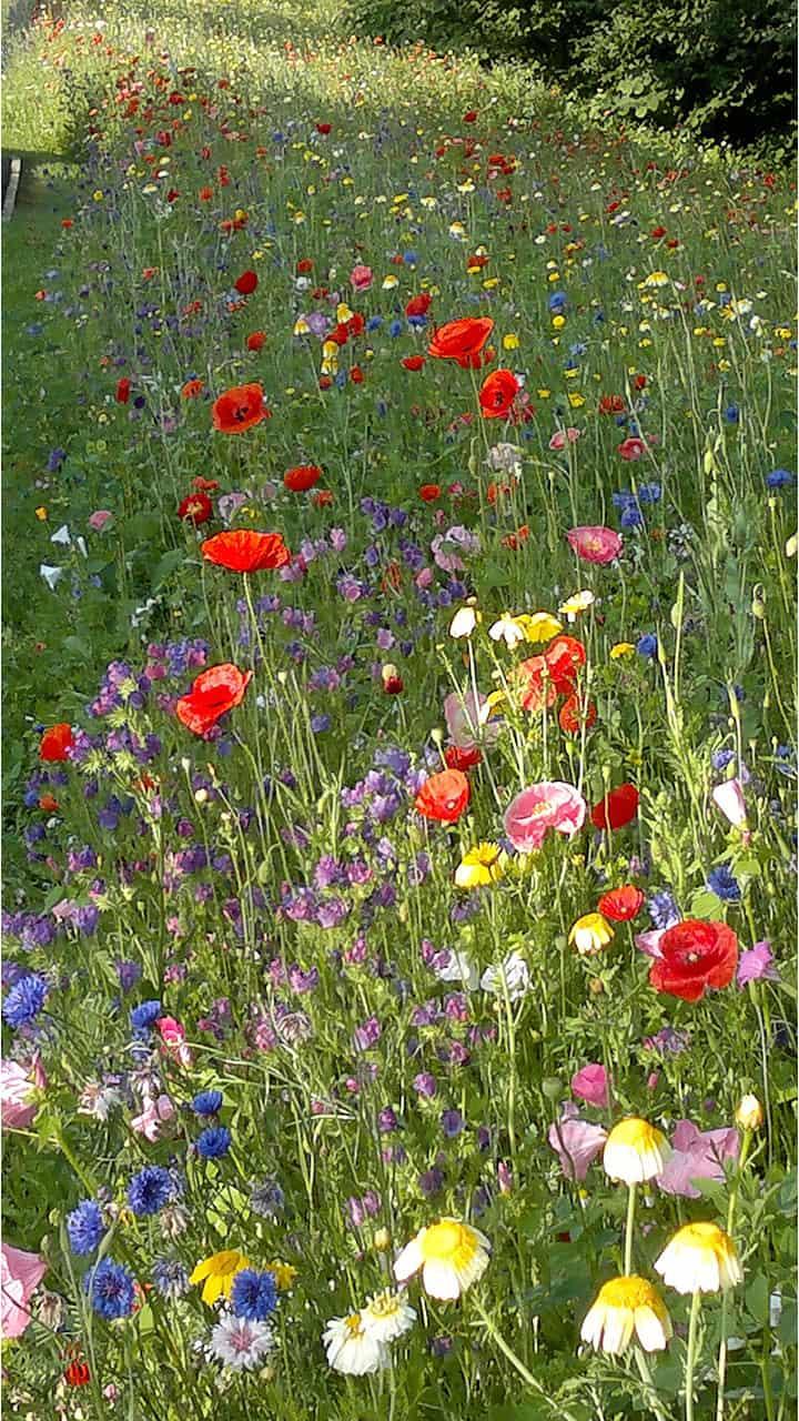 Prairie fleurie - Parmain (95)